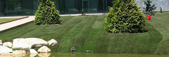 Gras leggen 1